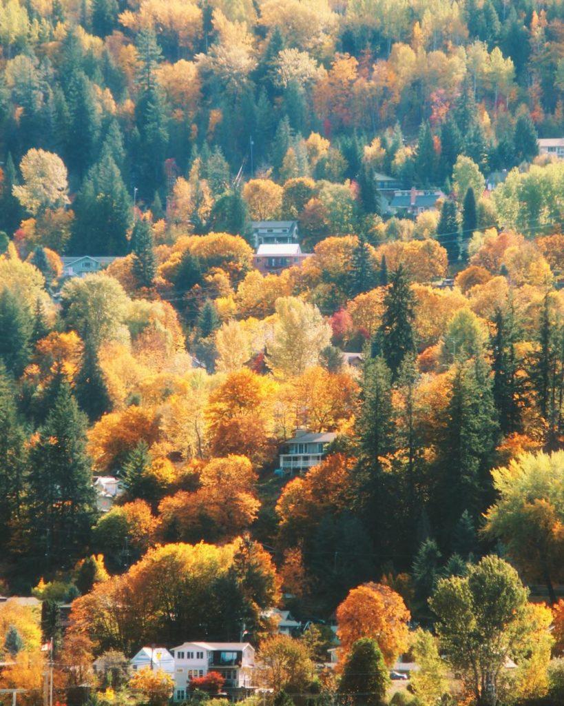 Houses are nestled amongst dense fall foliage.