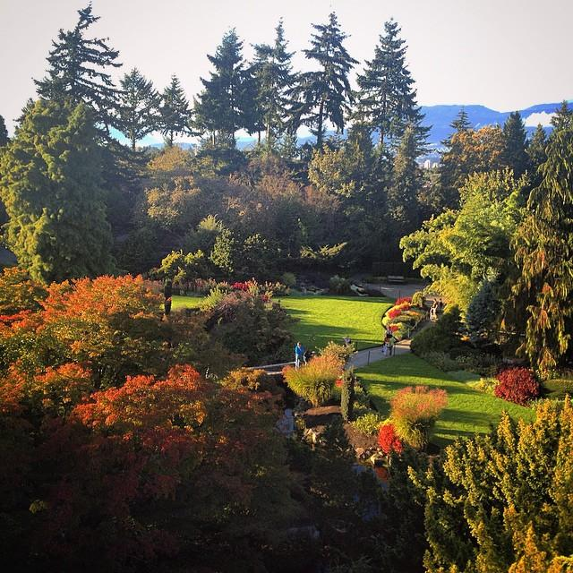 An abundance of fall foliage at Queen Elizabeth Park in Vancouver.
