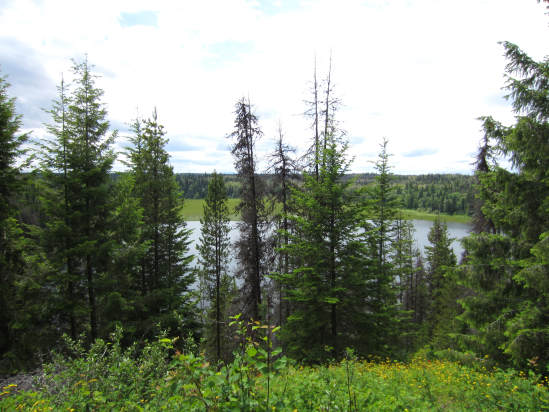 Views of a lake between large green trees.