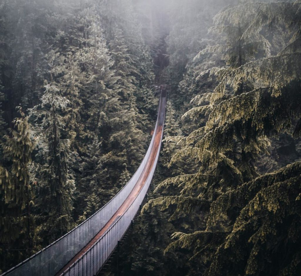 A long suspension bridge cuts through a dense forest.