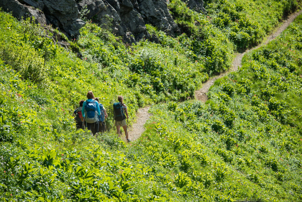 A group of hikers hike through a narrow trail with dense vegetation on both sides.