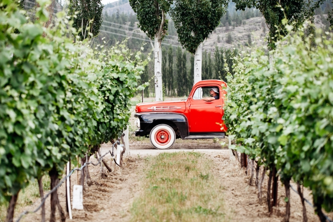A red pickup truck drives past a vineyard.