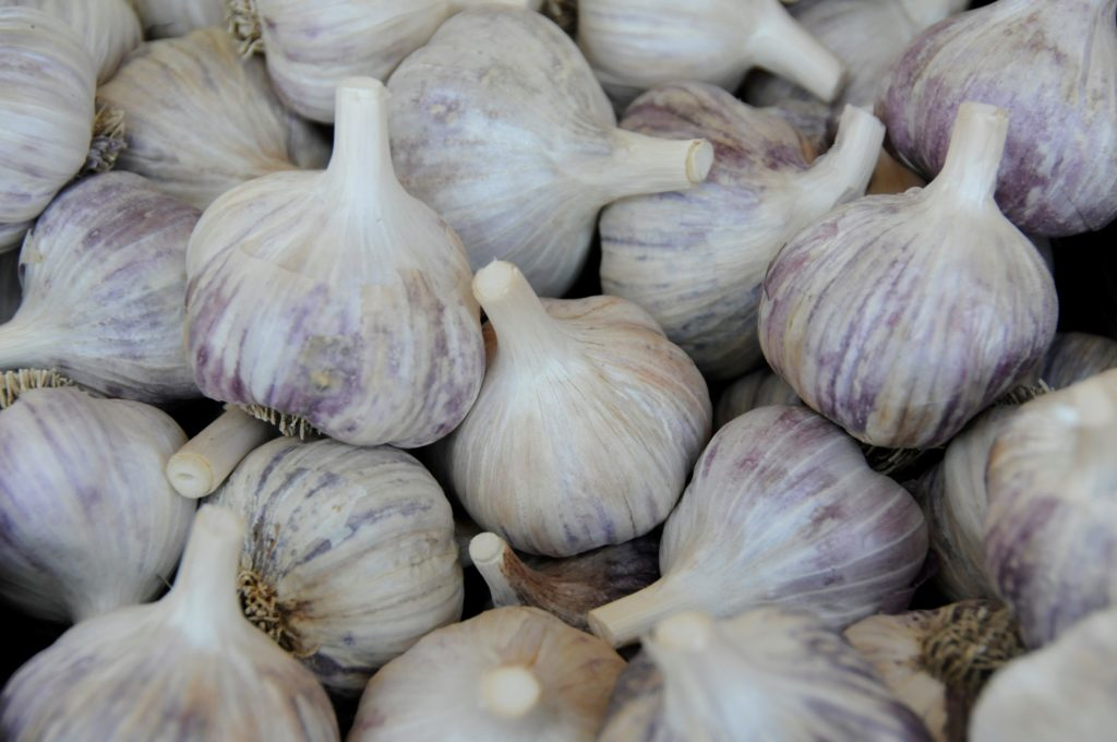 A large selection of fresh bulbs of garlic.