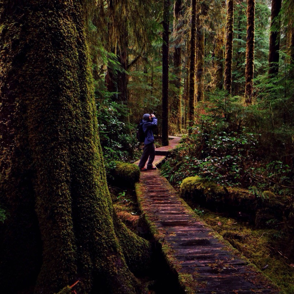 A man stops to snap a photo on a wooden trail through a dense forest.