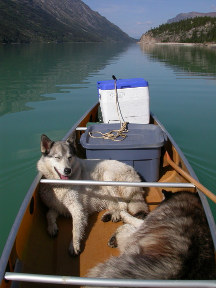 Two dogs lay on the floor of a canoe.