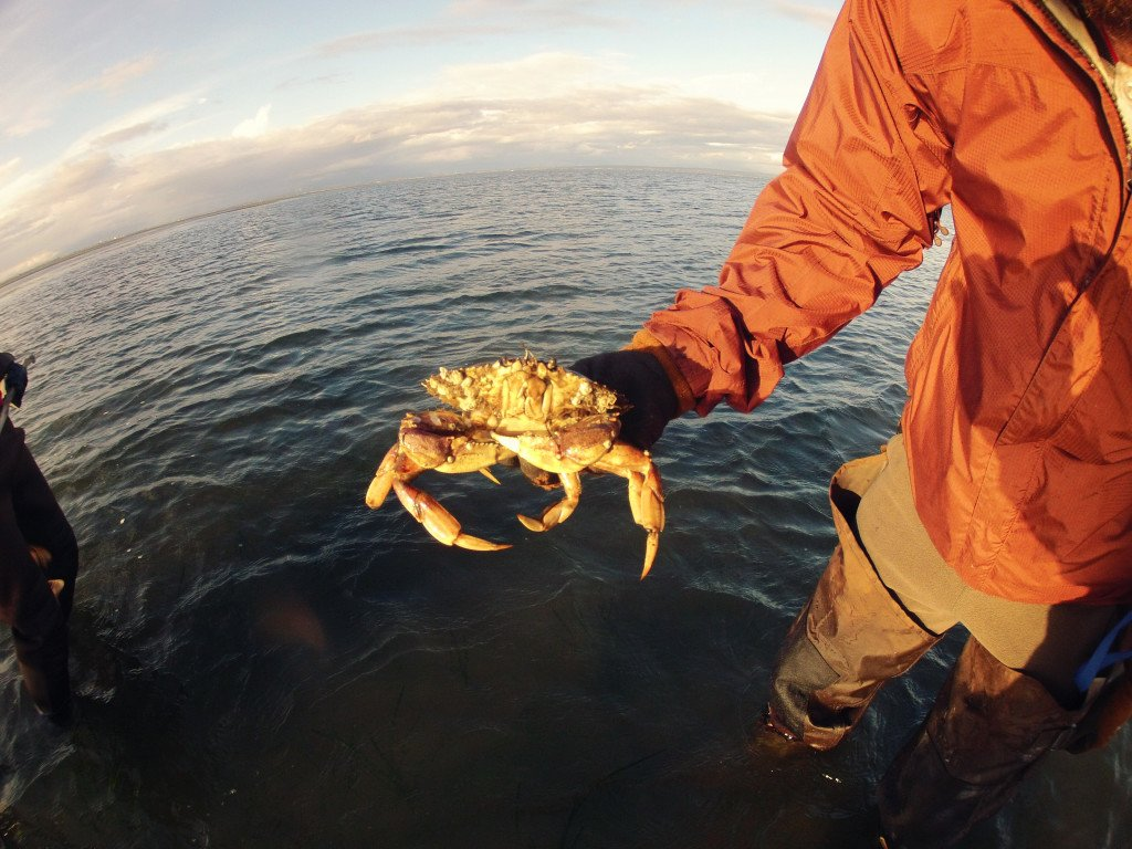 A man stands in the ocean, holding up a large crab.
