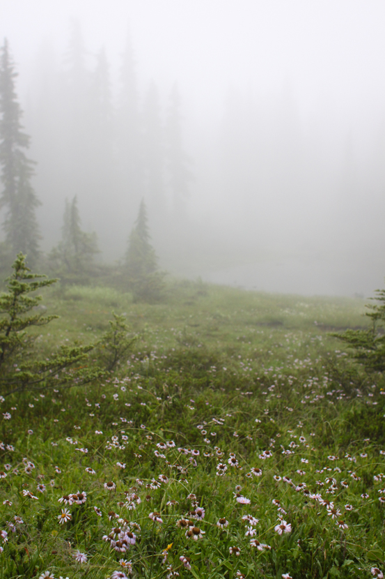 A meadow of blooming wildflowers under a dense fog.