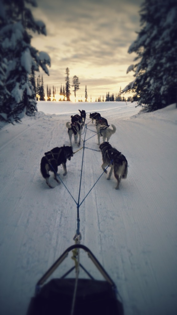 Candle Creek Dog Sledding at Big White Ski Resort near Kelowna. Photo: Candle Creek Dog Sledding
