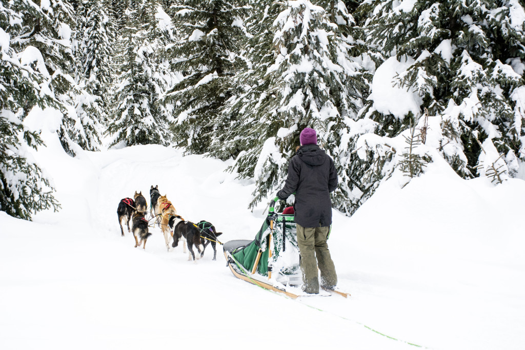 Mountain Man Dog Sled Adventures at Sun Peaks Resort near Kamloops. Photo: Mary Putnam