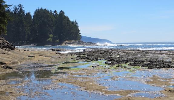 Tidal pools at Botanical Beach in Juan de Fuca Provincial Park, Vancouver Island.