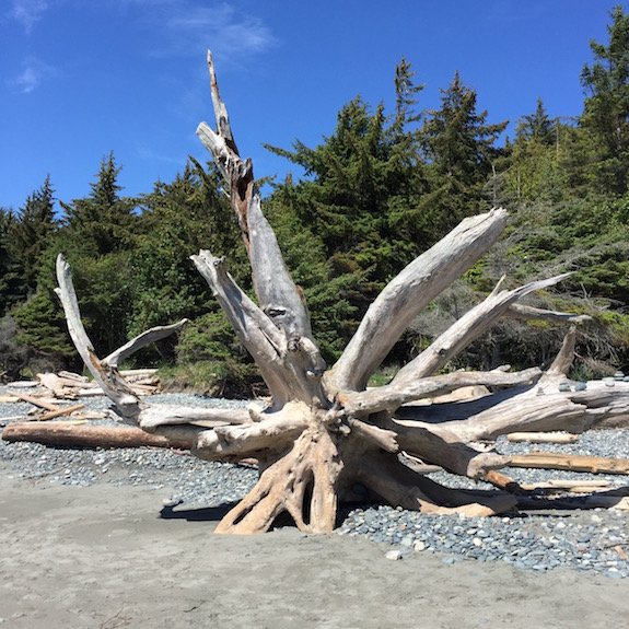 "A driftwood ""sculpture"" at French Beach Provincial Park, Vancouver Island."