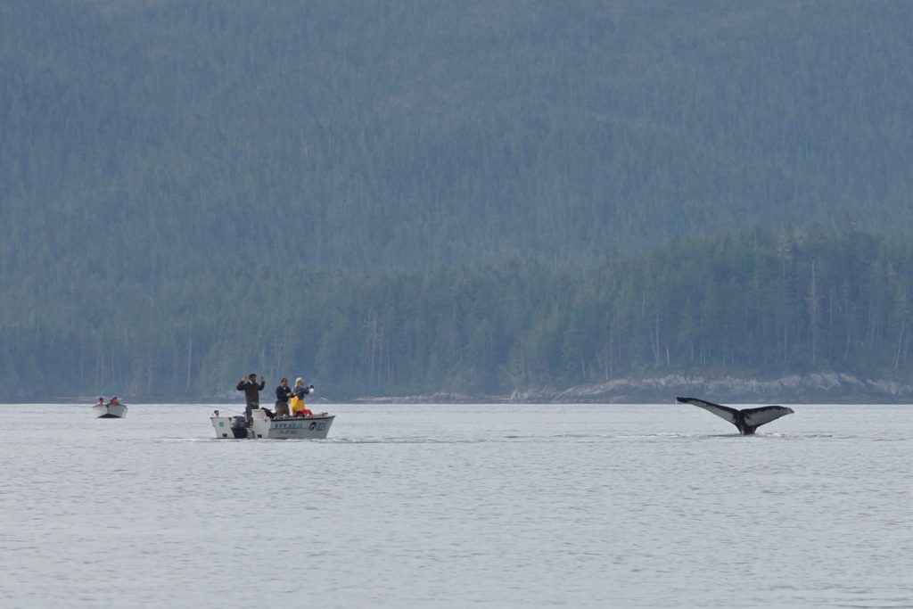 Fishing at Bayley Point with Ole's Hakai Pass