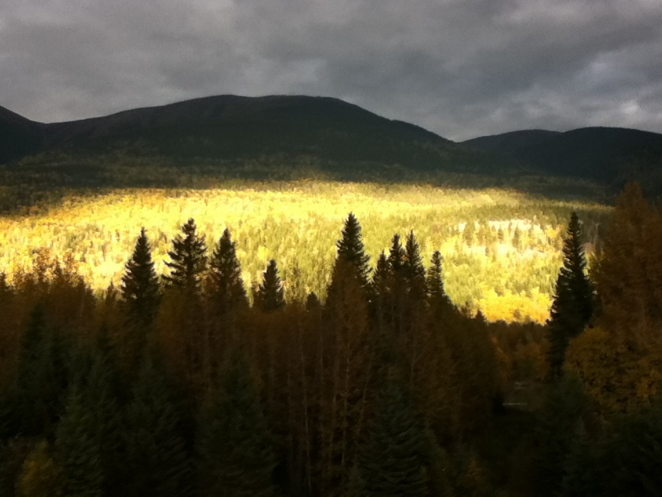 The sunset bathes the forest in a golden glow.