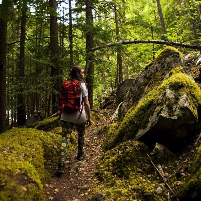 Hiking amongst the moss and trees in Purcell Wilderness Conservancy Provincial Park in BC's Kootenay Rockies region. Photo: @elliottkramer via Instagram