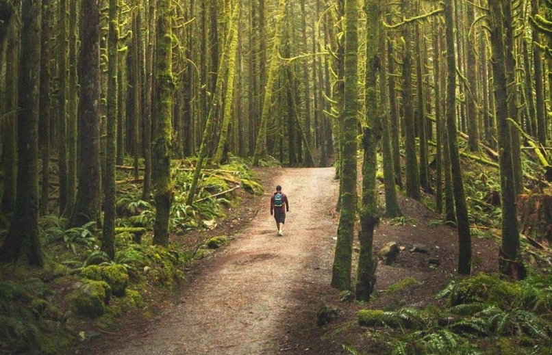 Forested trail in Golden Ears Provincial Park
