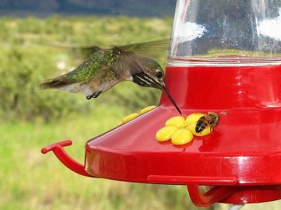 Humingbird at Osoyoos Desert Centre