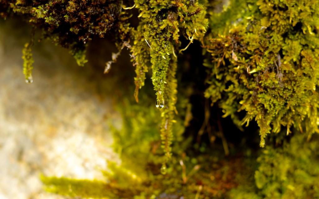 Fairytale Moss