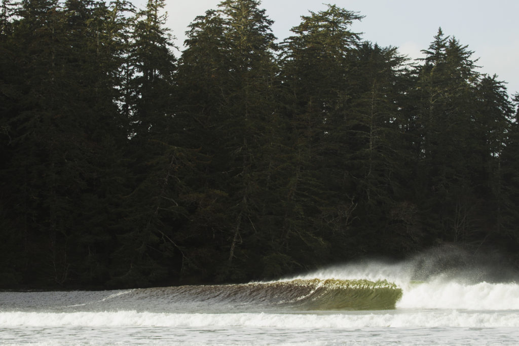 A large wave rolls past a dense forest.