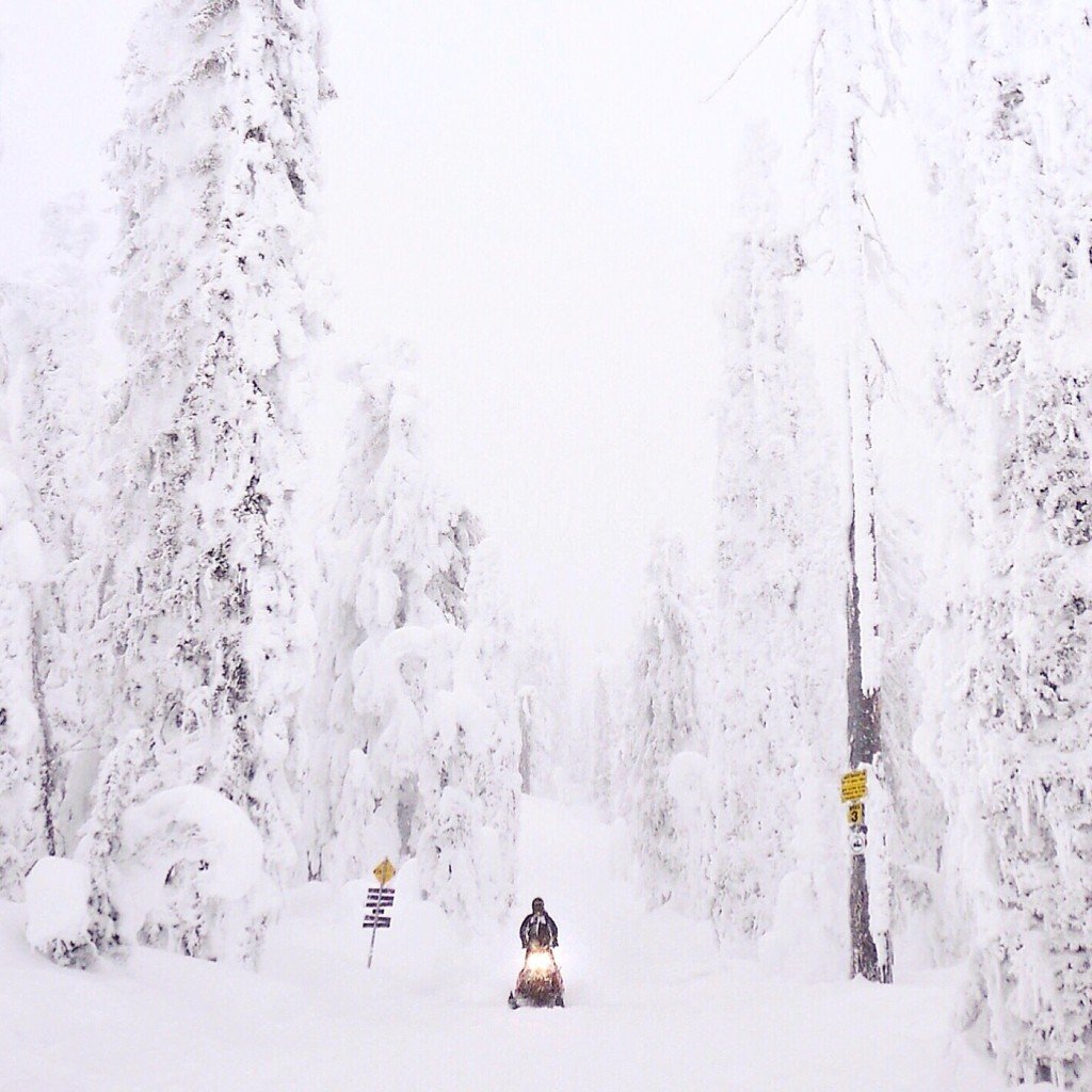 Snowmobiling through the snow-covered trees of Revelstoke with Great Canadian Snowmobile Tours. Photo: @erinireland
