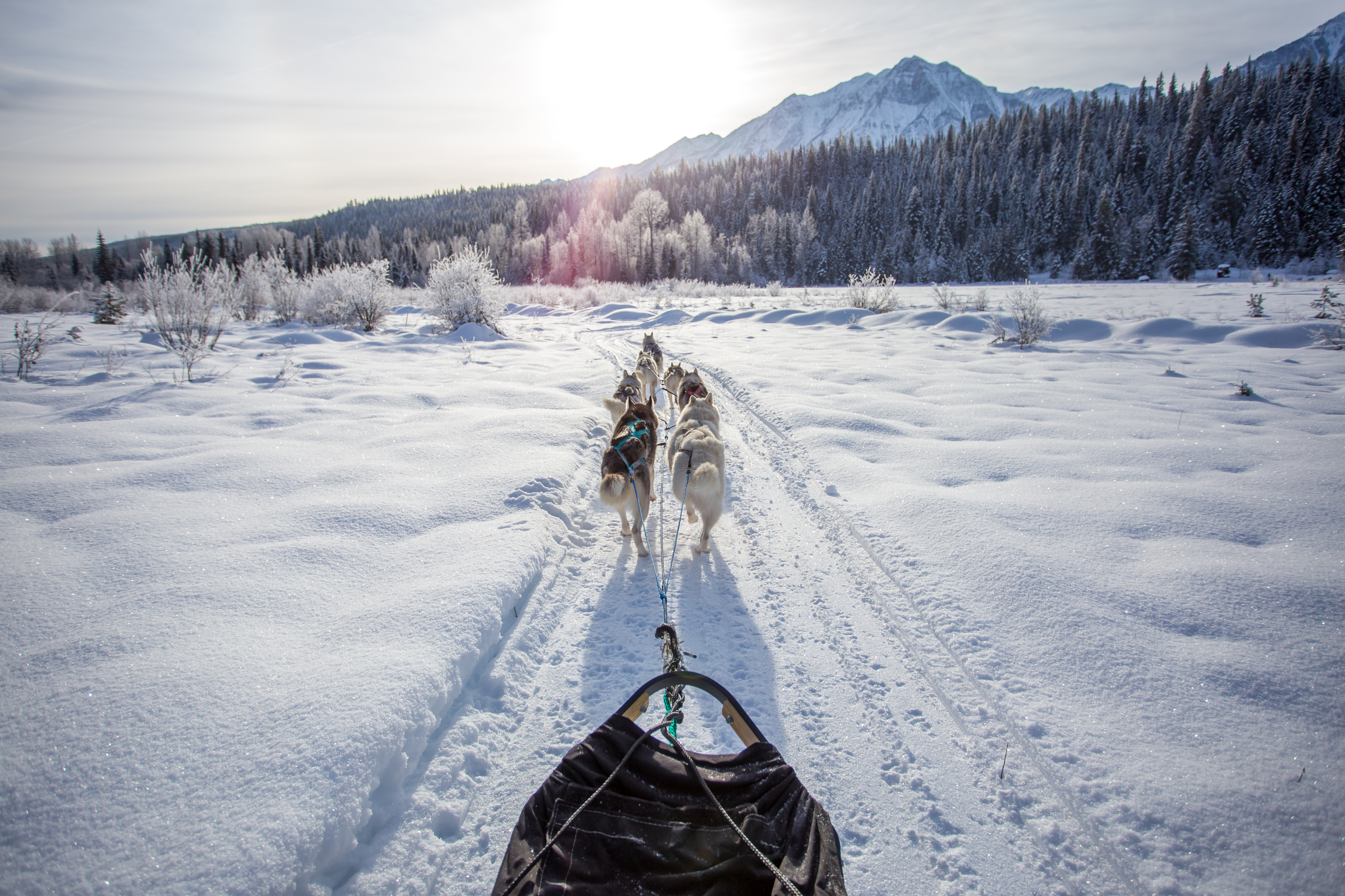 Golden Dog Sled Adventures, Golden BC