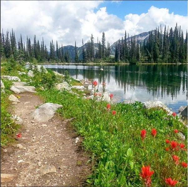 Bright red wildflowers bloom along a trail that takes you past a calm pond.