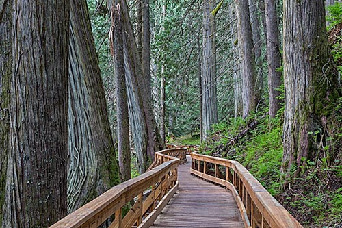 Walking along the paths of the Ancient Forest in Prince George, BC. Photo: Chris Harris