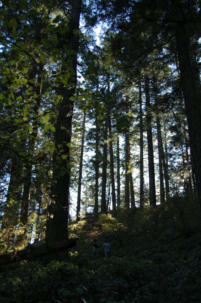Trees on Salt Spring Island. Photo: SYinc