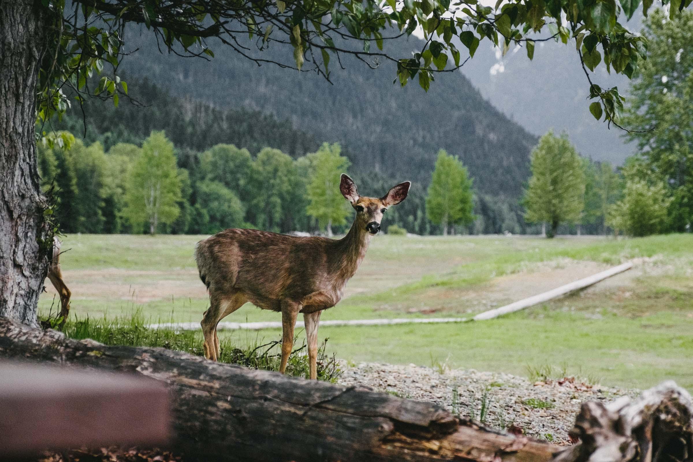 Skagit Valley wildlife