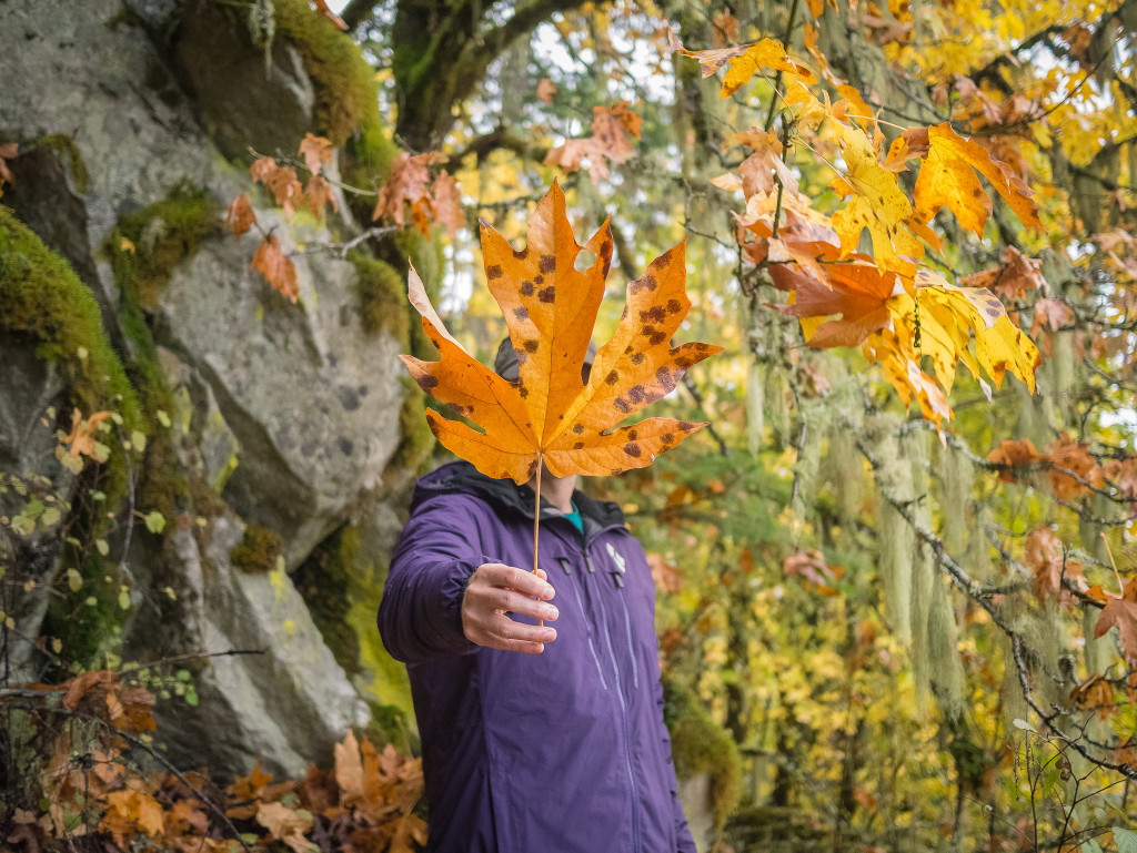 A hiker in a purple fleece holding a giant leaf in front of their face and surrounded by fall leaves and colours near the Area 44 climbing area in Squamish.