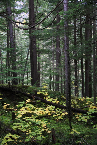 The forest along the road to Twin Falls Recreation Site, Smithers, BC
