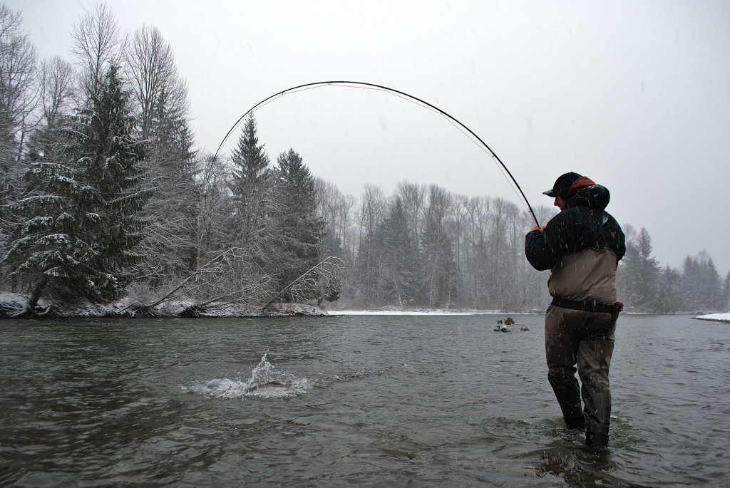 Steelhead fishing on a Skeena tributary in Northern BC. Photo: @adriennecomeau