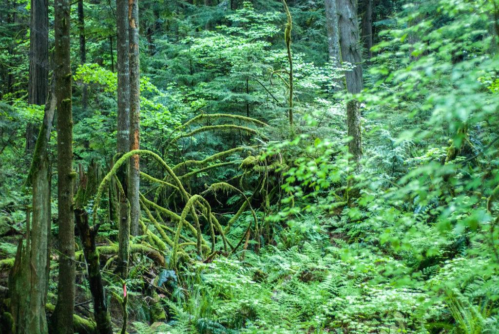 The rainforests of British Columbia.