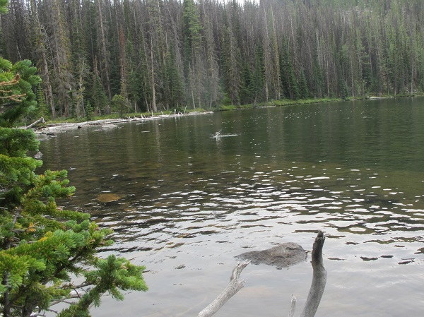 Fish jumping in one of the alpine lakes of Cathedral Mountain Park