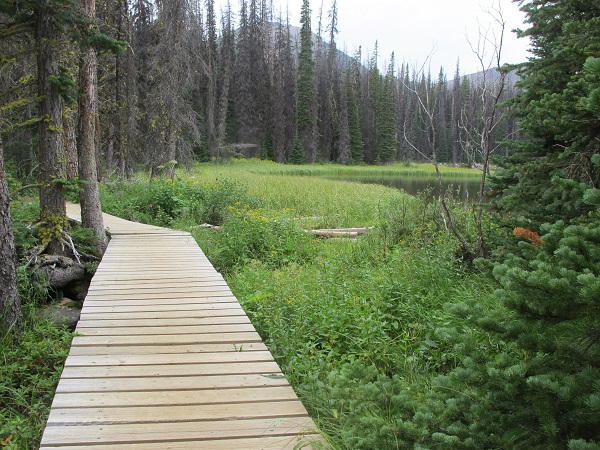 Intricate boardwalks protect marshlands in Cathedral Mountain Park