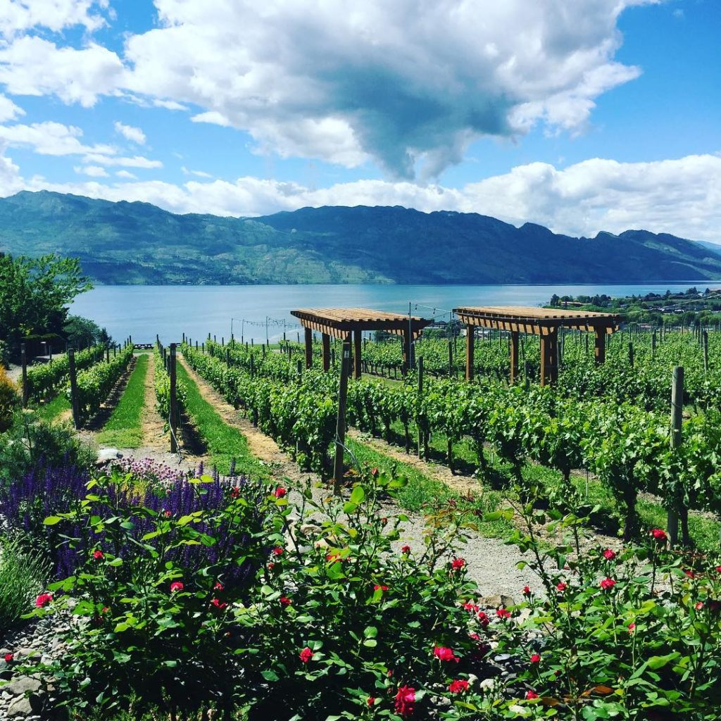 Looking out over Okanagan Lake from Quails' Gate winery in Kelowna