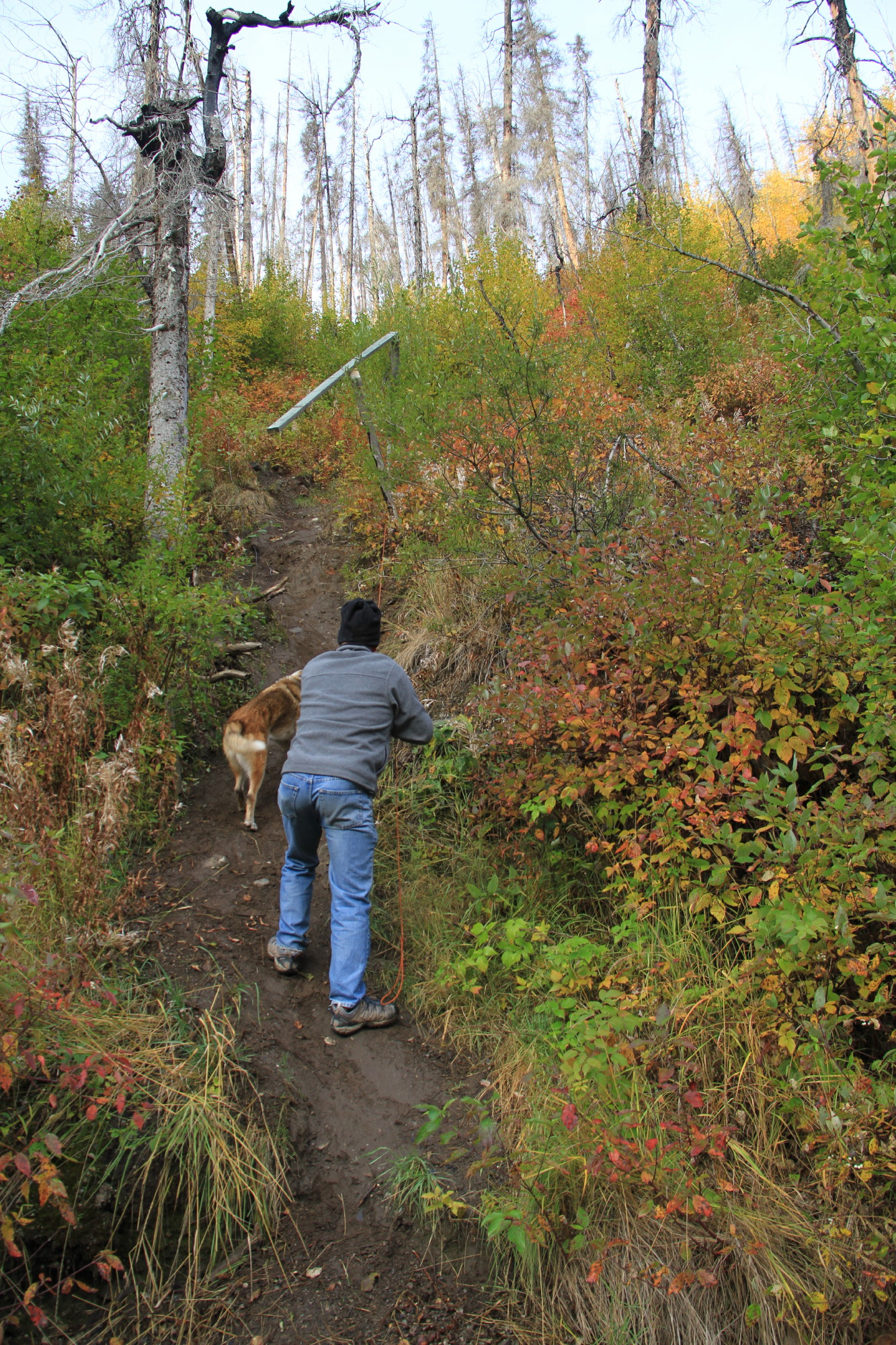 A man and his dog walk up a small hill overgrown with fall vegetation.