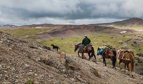 One man on a horse with two horses following behind carrying hikers' gear.