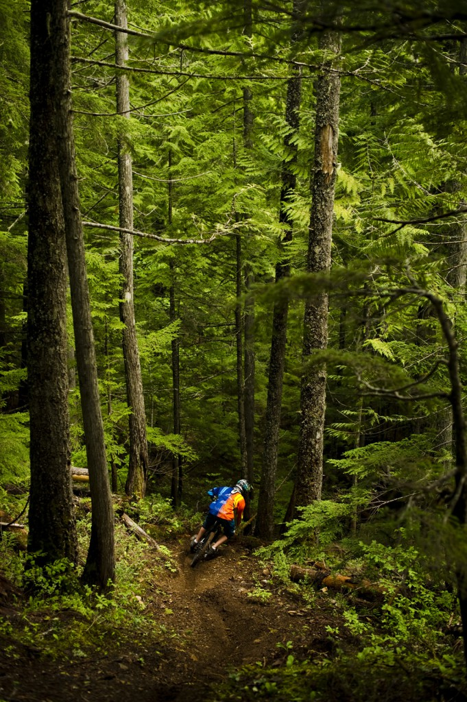 A mountain biker travels a difficult path in a dense forest.