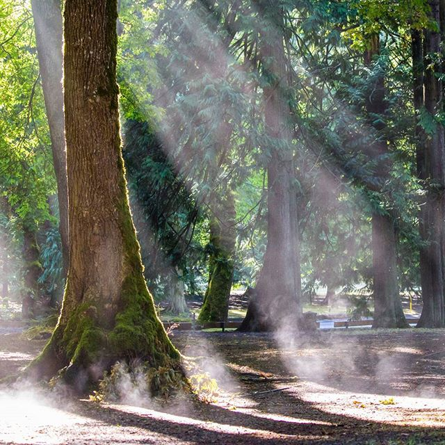 Sunlight beaming through the trees at Mount Douglas Park in Victoria.