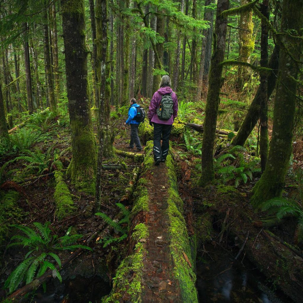 Two hikers travel over a moss-covered fallen log in a dense forest.