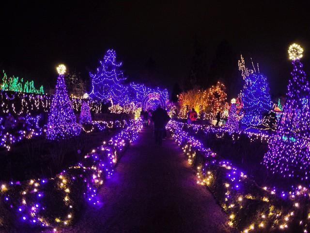 A stunning display of purple Christmas lights at the Botanical Garden in Vancouver.