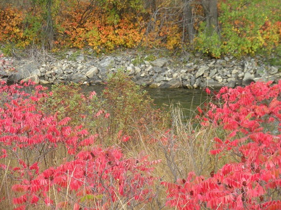 Red, orange, and green fall foliage grow along the edges of a creek.