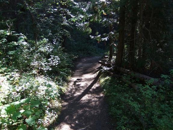 A rugged trail winds through dense vegetation.