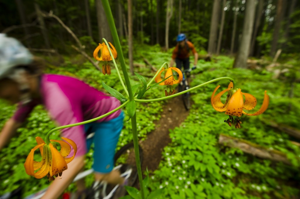 Two bikers travel on a path in a dense forest, past a blooming orange flower.