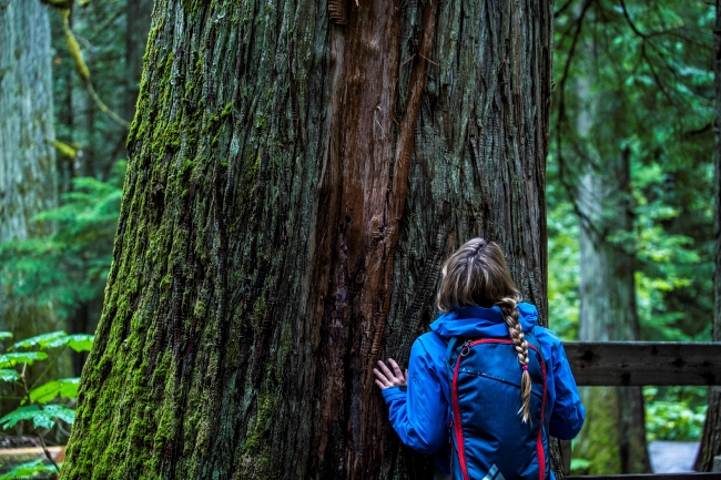 A woman in a blue jacket places her hands on a large, mature tree.