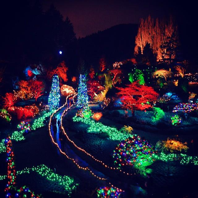 A colourful display of Christmas lights at Butchart Gardens in British Columbia.