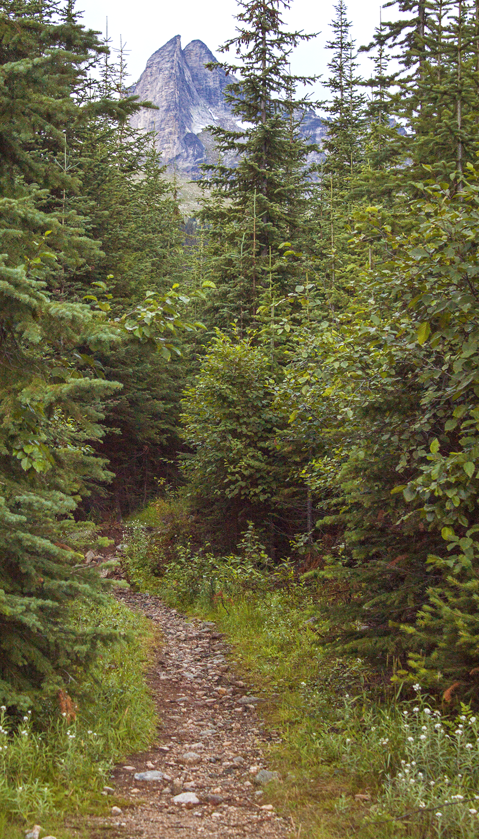 A path leads into a dense forest, towards a rocky mountain.