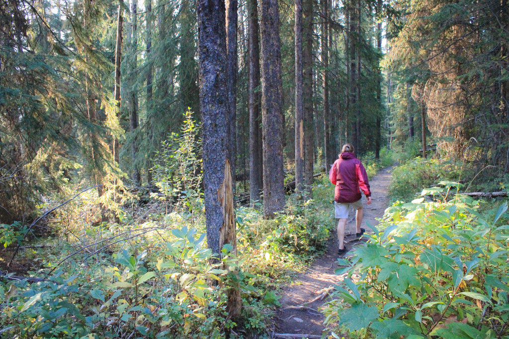 A hiker walks down a winding trail in the woods.