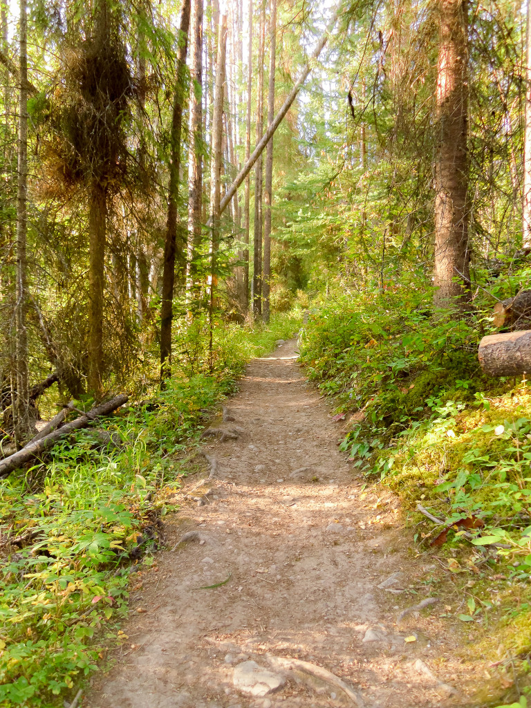 A well-traversed hiking trail in the woods.