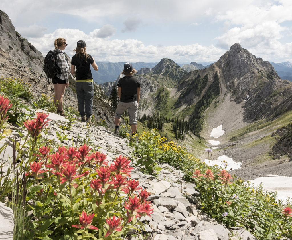 Alpine wildflowers in the Lizard mountain range, Fernie, BC. Photo: @mcphoto99